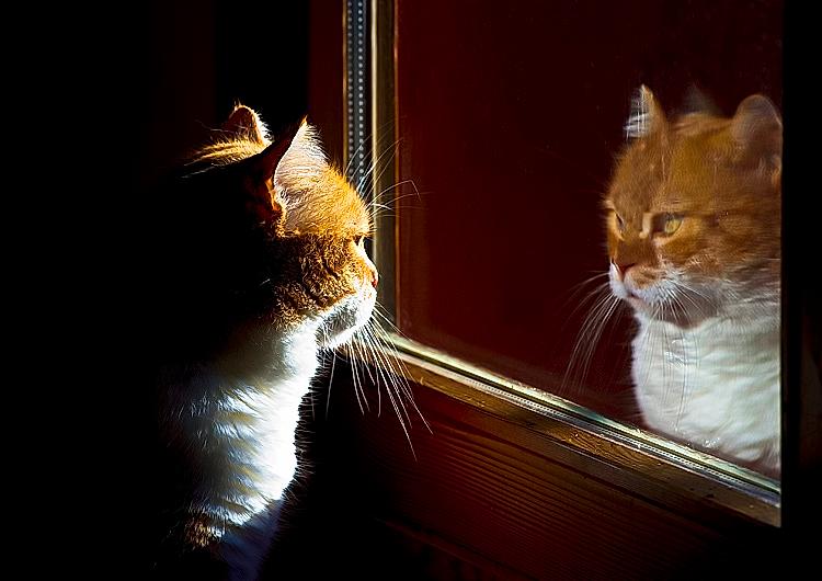 Lo specchio dott ssa stella chiavaroli - Lo specchio tarkovskij ...